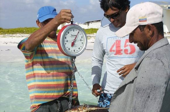 Latin American Fisheries Fellowship Fellow Aristo weighs a lobster with locals in Belize.