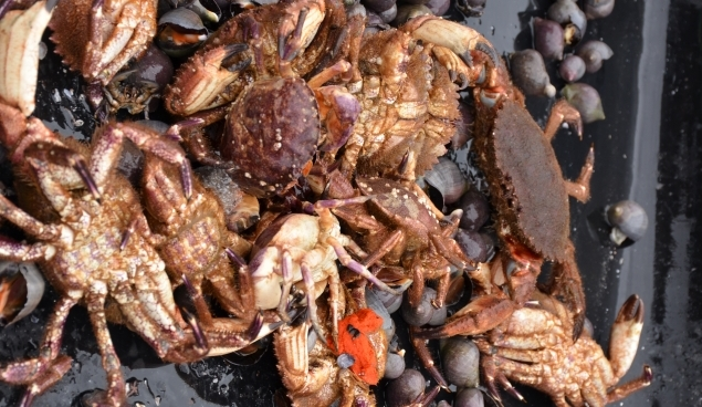 Crabs on board a fishing boat.