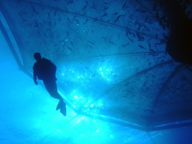 Diver near aquaculture pod.