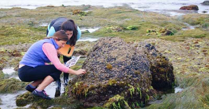 Volunteers collect data in an intertidal region.