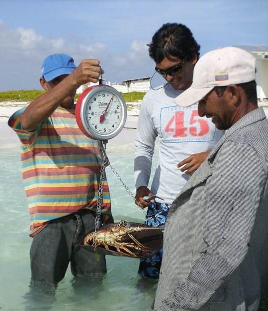 Aristo measuring lobster