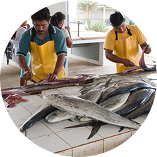 Fish processors