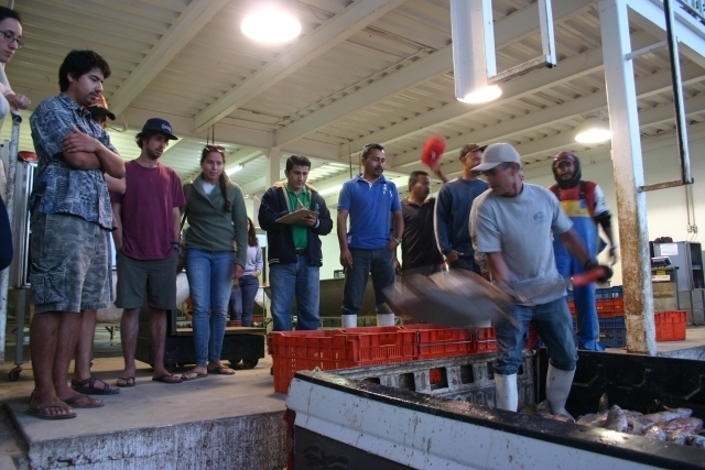 Latin American Fisheries Fellowship Fellows watch fishermen at port.