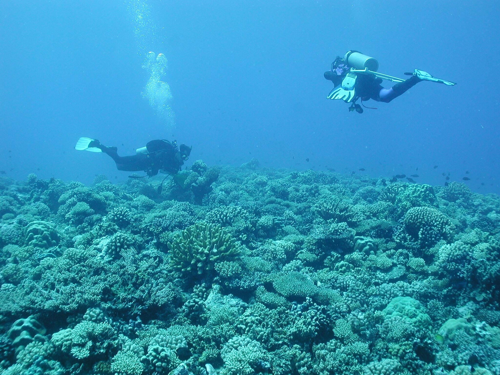 Hunter SCUBA diving